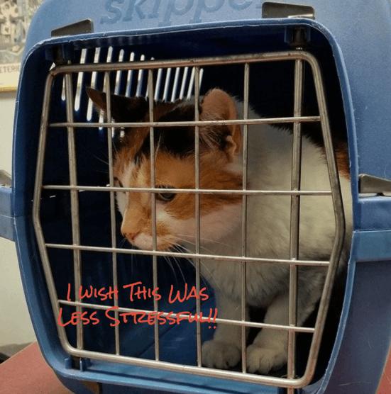 Cats, Travel & the Vet in Clarksburg, Germantown and Urbana